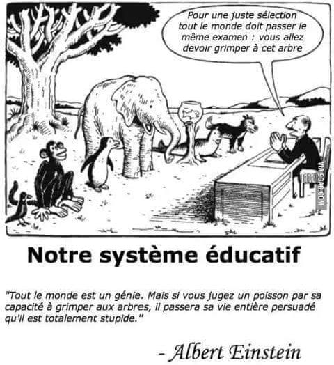 choix-regret-systeme-educatif-education-ecole-albert-einstein-stupide