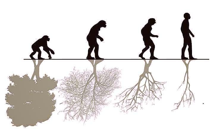 human-society-evolution-regression